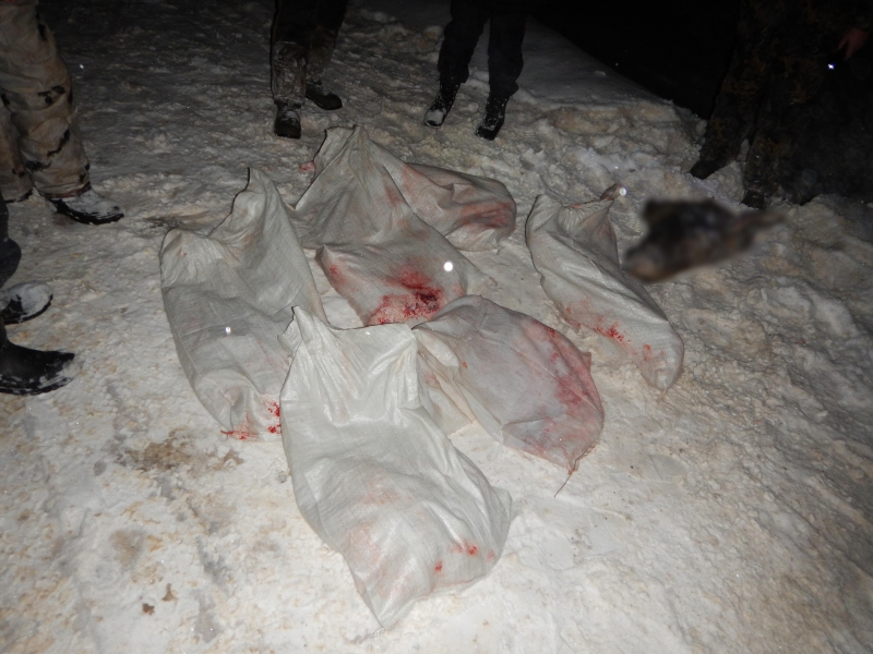 Браконьеров, застреливших лося, словили вРжевском районе