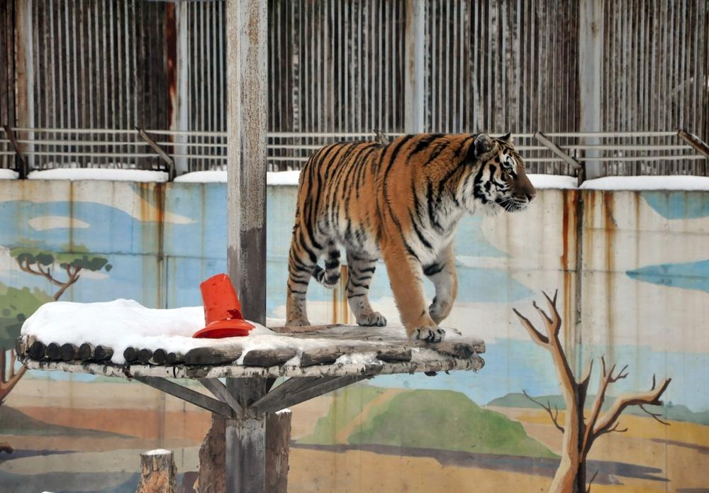 Ярославский иМосковский зоопарки заключили соглашение осотрудничестве