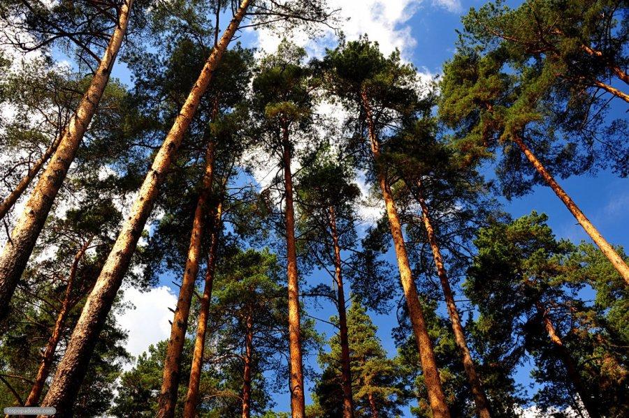 Ярославцы высказались против возведения домов вбору Заволжского района