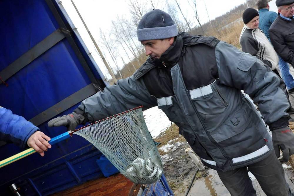 Подмосковные мальки сиговых «пропишутся» ваквакультурных хозяйствах Ярославской области