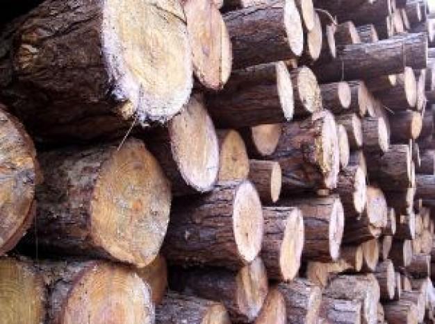 ВПошехонском районе мужчину насмерть придавило дерево