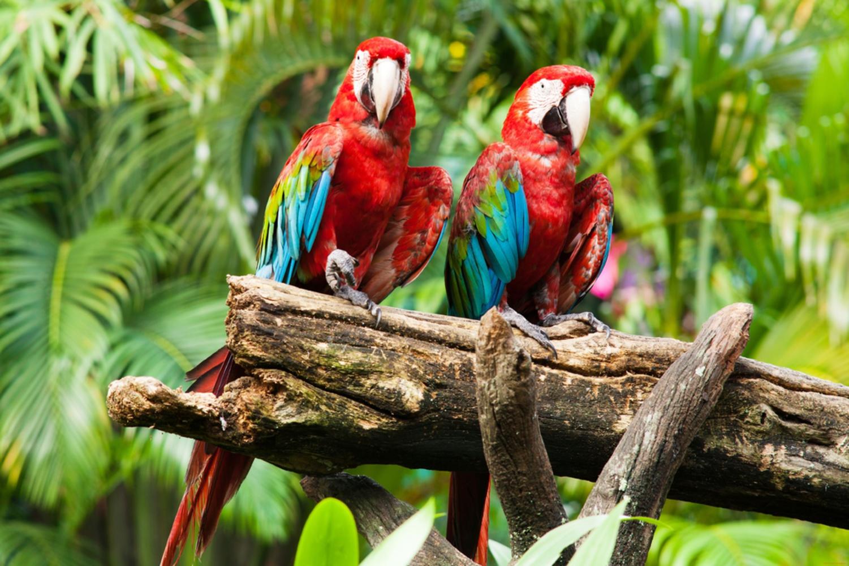 красные животные тропиков фото с названиями который дружит