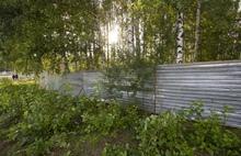 «Получен порубочный паспорт»: Рыбинская епархия рассказала о храме, который появится в березовой роще